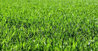 Køb rullegræs hele året rundt billigt her